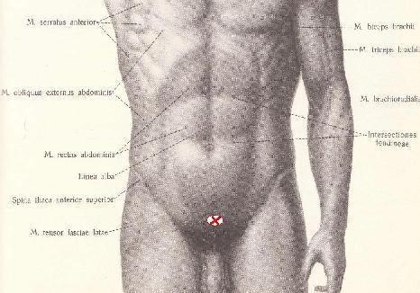 секс лобковый симфиз-жж2